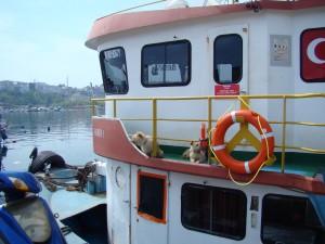 Balıkçı Teknesinde İkizler