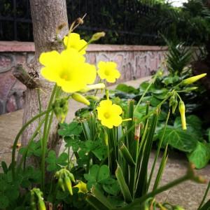 Her yer bahar, her yer çiçek