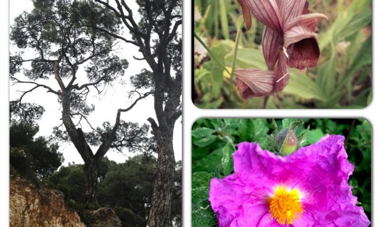 Paşalimanı Orman, Anadolu'lu orkide ve ladenler