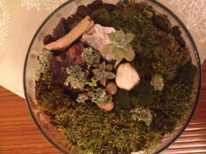 Succulent and moss terrarium