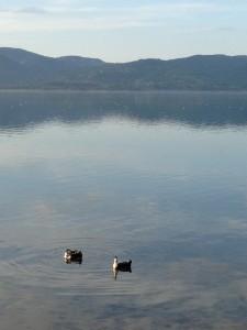 Göl ayna
