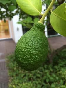 joyofearth-limon